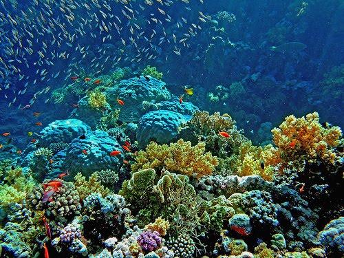 grande-barreira-de-corais-4